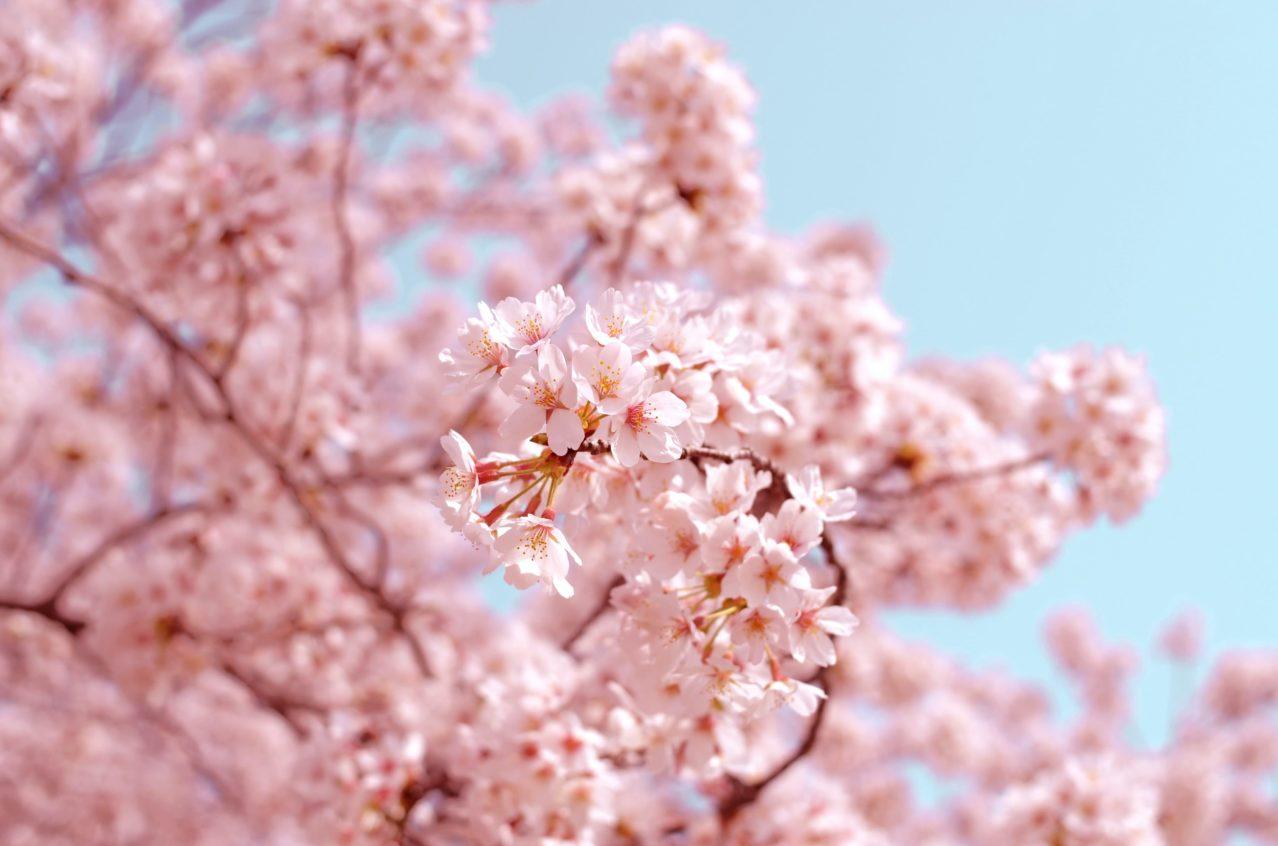 体験参加可能!春のミニキャンプを実施(2021年3月26~28日)